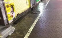 Japonlar Tayfun sonrası farelerle uğraşıyor
