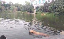 Göle giren köpek neye uğradığını şaşırdı!