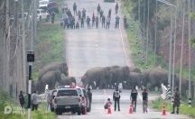Tayland'da şaşırtan görüntü