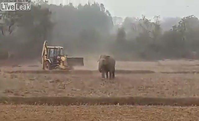 Filin iş makineleriyle imtihanı